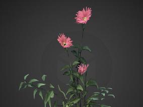 一株粉色花植物模型