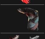 斗鱼3d模型