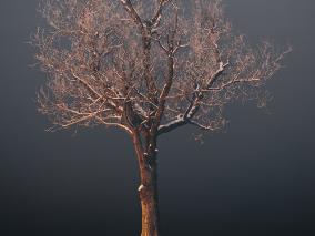 冬天的树模型