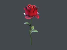 玫瑰  花  写实