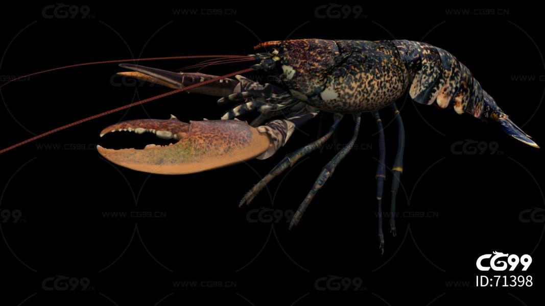 深海大龙虾