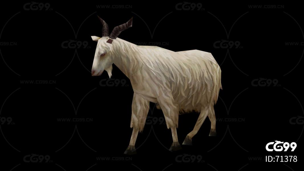 行走的羊 简模 带动画 绵羊max