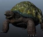 乌龟 陆龟带绑定 动物