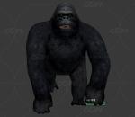 黑猩猩动作一套