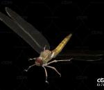 飞行的蜻蜓 昆虫 益虫