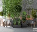 竹子,盆栽