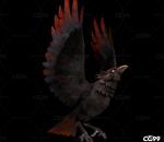 飞鸟 影视级鸟带动作一套