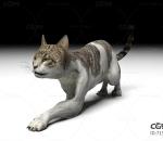 狸花猫 可爱猫咪带动作一套
