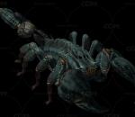 蝎子带一套动作