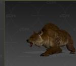 棕熊 白熊 保护动物 带一套动作