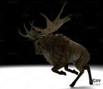 老鹿带动作一套