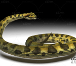 各种材质的蛇带一套动作
