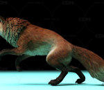保护动物 狐狸动作一套