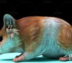 小动物 仓鼠 老鼠 带动作一套