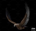 飞鸟 老鹰动作一套