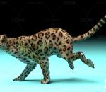 花豹 豹子带一套动作