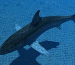 影视动画系列大白鲨