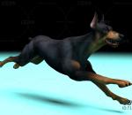 大黑狗带一套动作