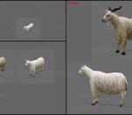 简模山羊带动画一套