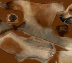 小狗带绑定 带奔跑动作 4组皮肤