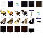 带骨骼绑定动作的超精细蝴蝶 带多套贴图