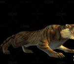 老虎 吊睛猛虎 卡通老虎带一套动作