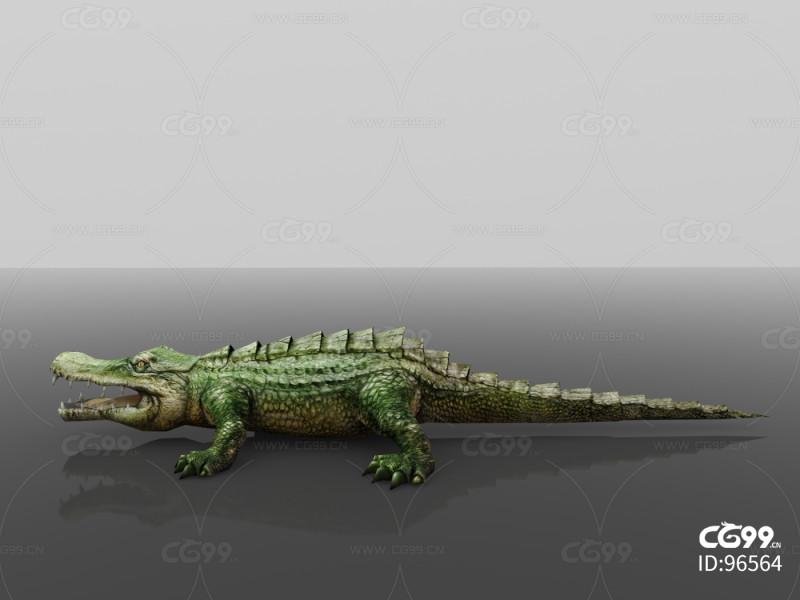 爬行动物 鳄鱼