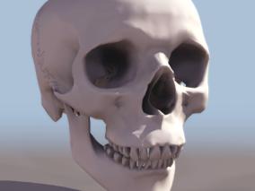头骨cg模型