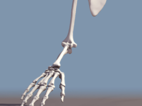 手骨cg模型