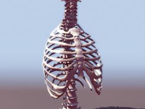 胸骨cg模型