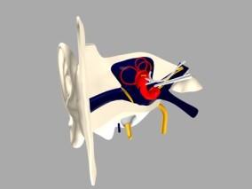 耳朵cg模型