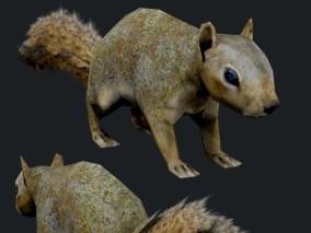 次时代写实松鼠cg模型