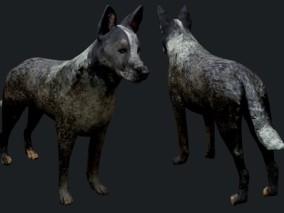 次时代写实猎犬cg模型