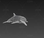 宽吻海豚  海豚