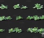 甘蓝 经济作物 植物 农产品 农作物