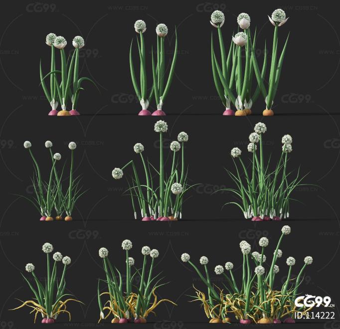 洋葱 经济作物 植物 农产品 农作物