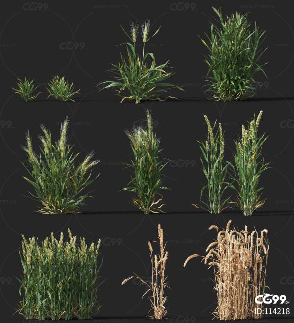 小麦 经济作物 植物 农产品 农作物