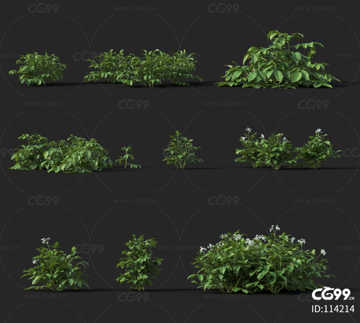 马铃薯 经济作物 植物 农产品 农作物