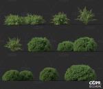维吉塔  灌木 植物