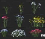 亚麻 经济作物 植物 农产品 农作物