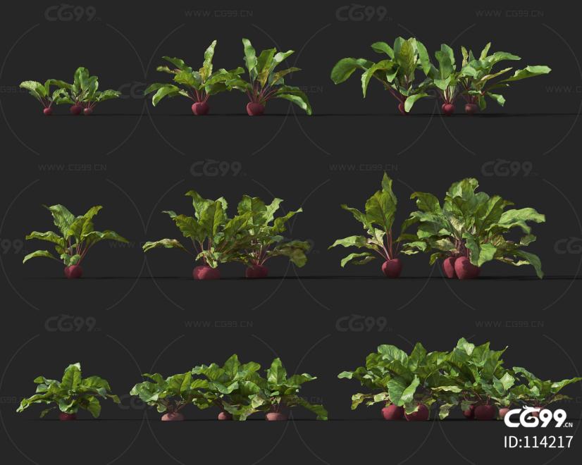糖萝卜 经济作物 植物 农产品 农作物