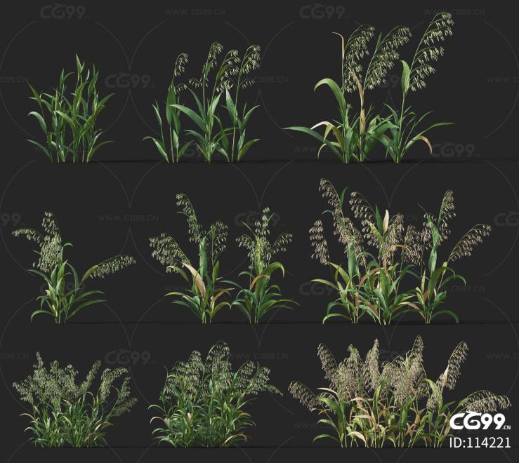 燕麦 经济作物 植物 农产品 农作物