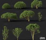 茶树 植物 农作物