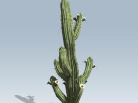 柱形仙人掌 植物 绿植 灌木