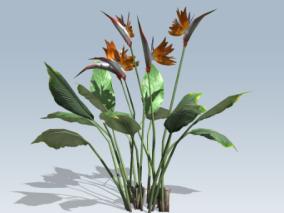 极乐鸟 花朵 鲜花 灌木