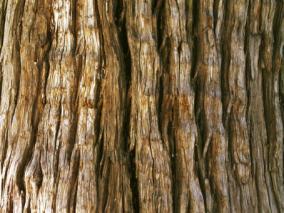 高清木头材质贴图素材