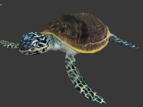 海龟【带骨骼动画】
