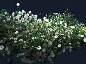 植物 白色小花场景 3d模型