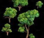 三渲二Q版小树3Dmax模型