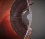 眼睛 眼球 眼解剖 眼珠 眼科 近视眼 瞳孔 眼部保健 隐形眼镜